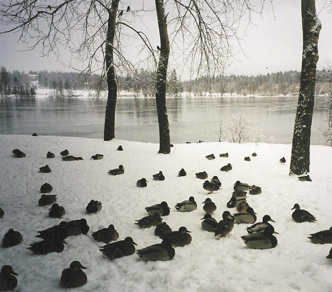 talvihorros.jpg