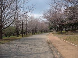 sakuramichi.jpgmini.jpg