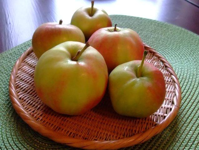 omena suomi 2011.jpg