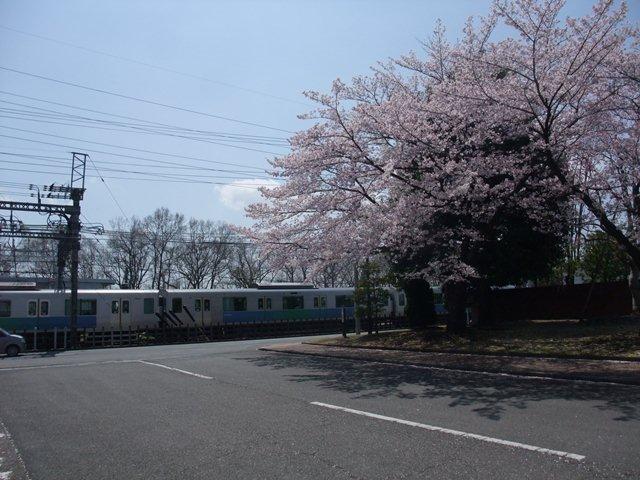 sakura and seibusen.jpg