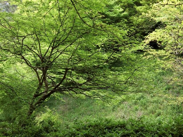 green (640x480).jpg